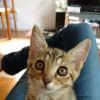 Photo of Bengi