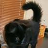 Photo of Smokey (Pink Collar) & Bandit