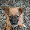 Photo of Kip