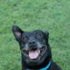 Photo of Percy