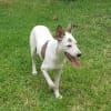 Photo of Anjo