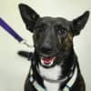 Photo of Tara **Adoption Pending**