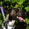 Photo of Tara ~$99 Adoption Fee~