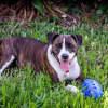 Photo of Roxie