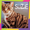 Photo of Suzie