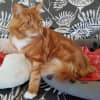 Photo of Jaffa **On Trial With My New Family**