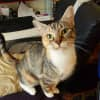 Photo of Zira