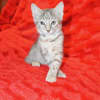 Photo of Dollie   C3283   Adoption Pending