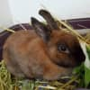 Photo of Gertie **On Trial With My New Family**