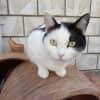 Photo of Morgana