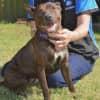 Photo of Tahlia   D3893   Adoption Pending