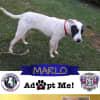 Photo of Marlo