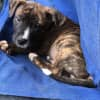 Photo of Jett ~ Adoption Pending ~
