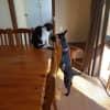 Photo of Izzy (On Adoption Trial)