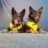 Photo of Milli (Female) And Banjo (Male)