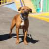 Photo of Jett (3672)