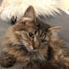 Photo of Neo