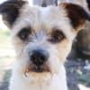 Photo of Squeaky