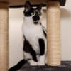 Photo of Clyde **2nd Chance Cat Rescue**