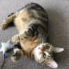 Photo of Ak2048 – Kit Cat