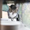 Photo of Gypsy (Bonded With Rosie)