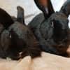 Photo of Kiwi & Midnight