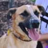 Photo of Poncho