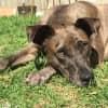 Photo of Zulu