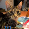 Photo of Mj