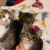 Photo of The Three Amigos!