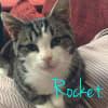 Photo of Rocket   Meet Me At Neko Hq/Cat Lounge Preston
