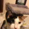 Photo of Sweety