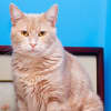 Photo of Tony **2nd Chance Cat Rescue**