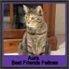 Photo of Aura
