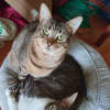 Photo of Jakodi & Tahvo (Located In Wyndham Vale)