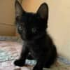 Photo of Zorro