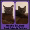 Photo of Mocha & Latte