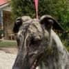 Photo of Zeb