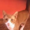 Photo of Orange