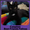 Photo of Caspian