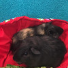 Photo of Bailey And Licorice