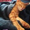 Photo of Mulder