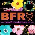 Best Friends Rescue QLD