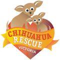 Chihuahua Rescue Victoria