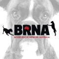 Boxer Rescue Network
