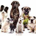 Adopt a Dog Fraser Coast Inc