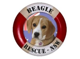 Beagle Rescue NSW