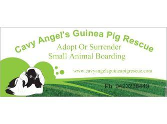 Cavy Angel's Guinea Pig Rescue