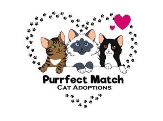 Purrfect Match Cat Adoptions