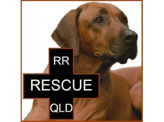 Rhodesian Ridgeback Rescue Qld